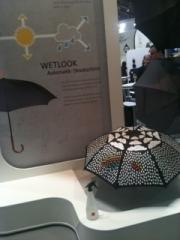 paraplu in het wild gespot